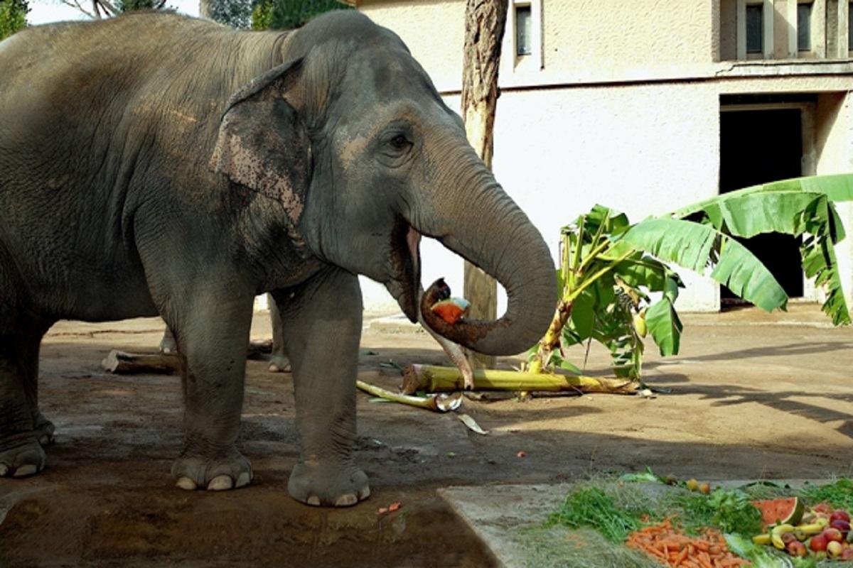 Bioparco: appuntamento con il pasto degli animali