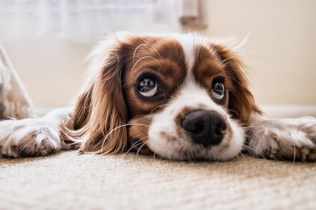Emergenza adozioni per i cani di Villa Andreina
