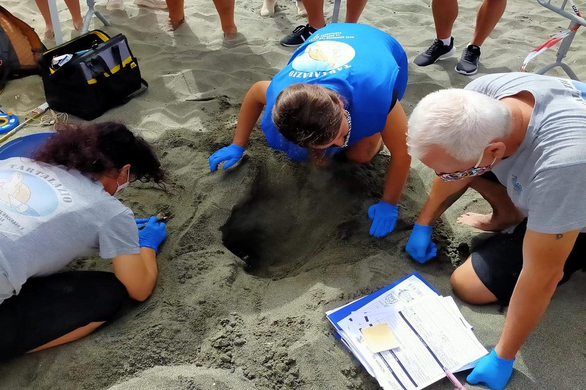 Ostia: una tartaruga Caretta caretta ha deposto le uova sulla spiaggia